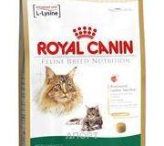 Фото Royal Canin Maine Coon 31 Adult 2 кг